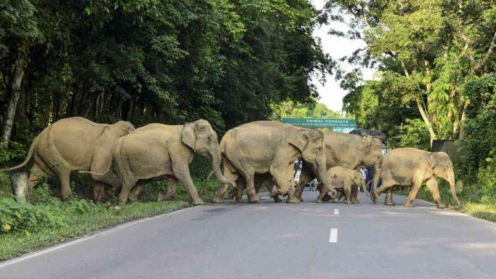La marcha de los elefantes