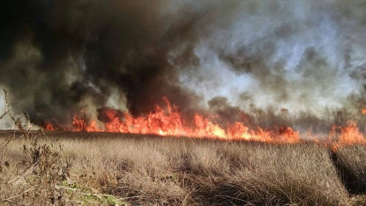 Semaforazo por los incendios en Laguna de Rocha