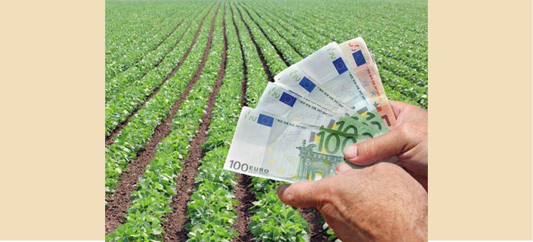 Sistema alimentario global: ¿Quién paga el costo de la mala comida?