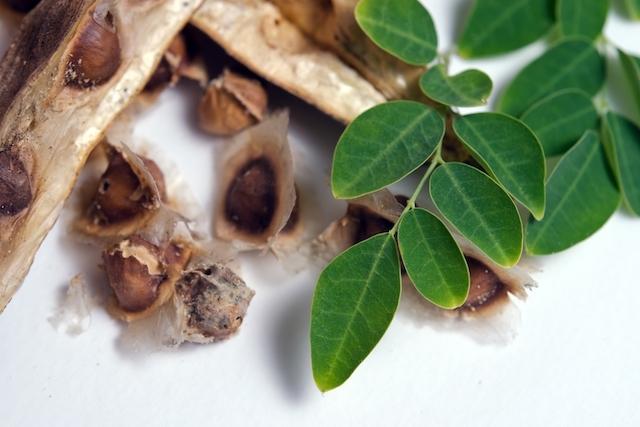 ¿Para qué sirve la moringa? Secretos para tener una planta en casa