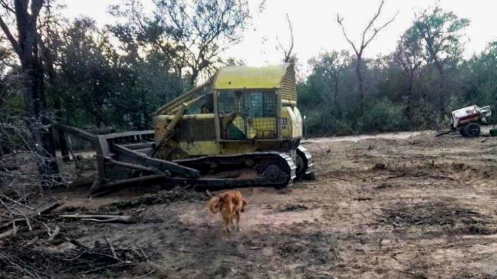 Chaco: el bosque nativo desaparece, las comunidades campesinas resisten