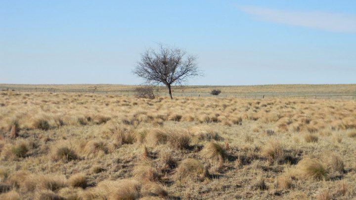 El proyecto, el calentamiento global, el desierto y las nuevas alianzas